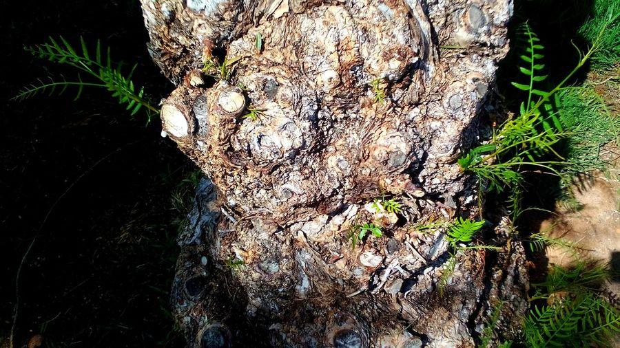 Tree Trees Arboles Arbol. Arboles , Naturaleza Verde