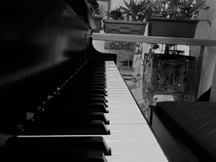 If only I could talk like a Piano Arts Culture And Entertainment Cat Melody Music Musical Instrument Peace Piano Piano Keys Soothing SoulfullPowerful Universal Language Piano Moments