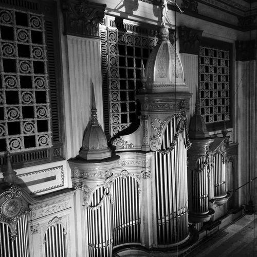 Largest Organ