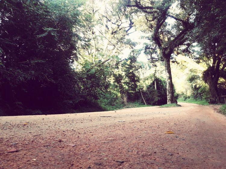 uma bela estrada de vida! Tree Day Nature No People Outdoors Sky Beauty In Nature