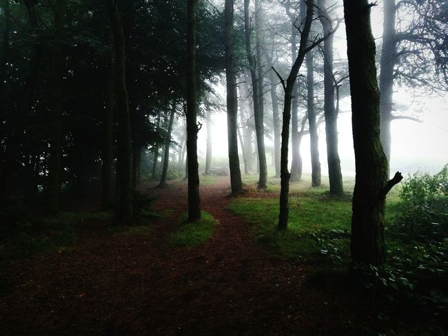 Tree Forest Nature Fog Landscape Outdoors Beauty In Nature Tree Trunk Scenics No People Day Grass Tree Area