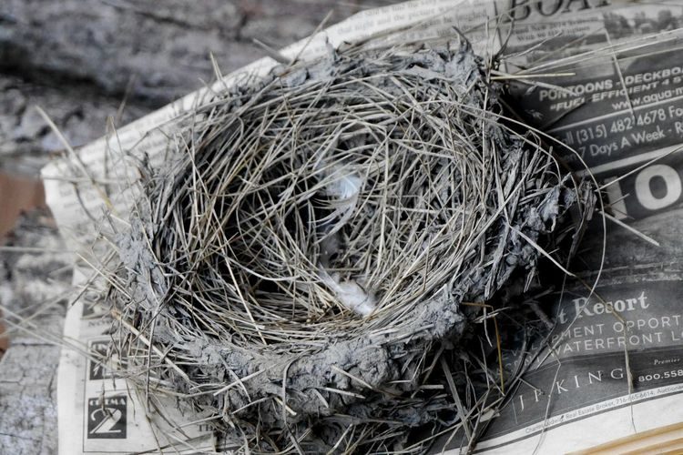 High Angle View Outdoors Complexity Nature Close-up Day Nest Newsprint Newspaper Fallen Nest