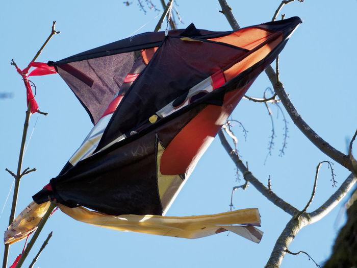Zee in Tree