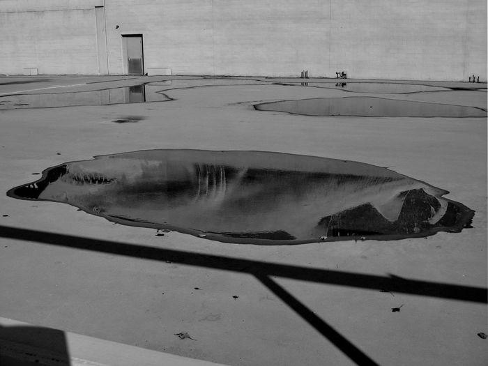 Puddle Shark