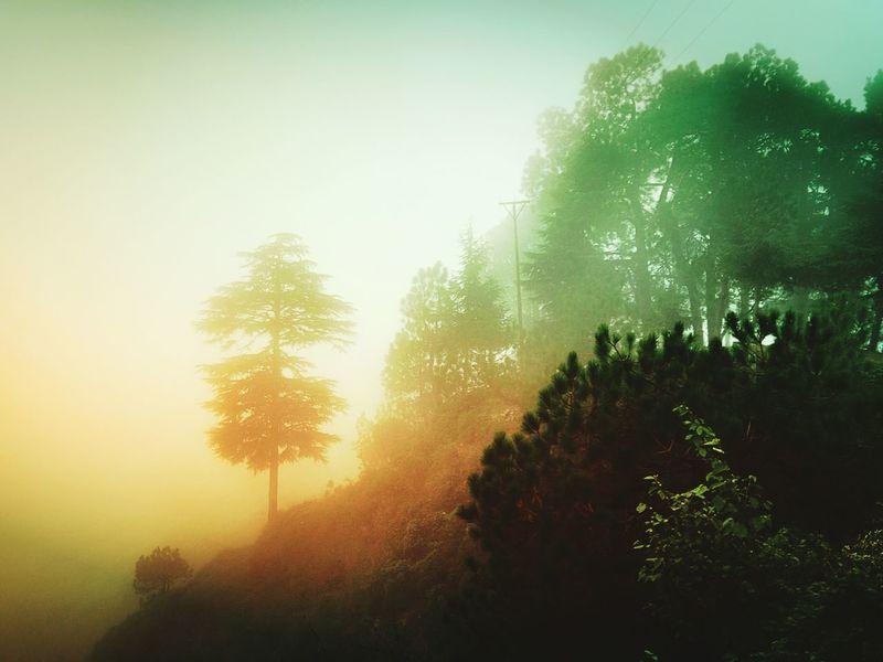 Mountains Walking Around Nature Travel Oneplusone Trees Imnmo Relaxing Meditation