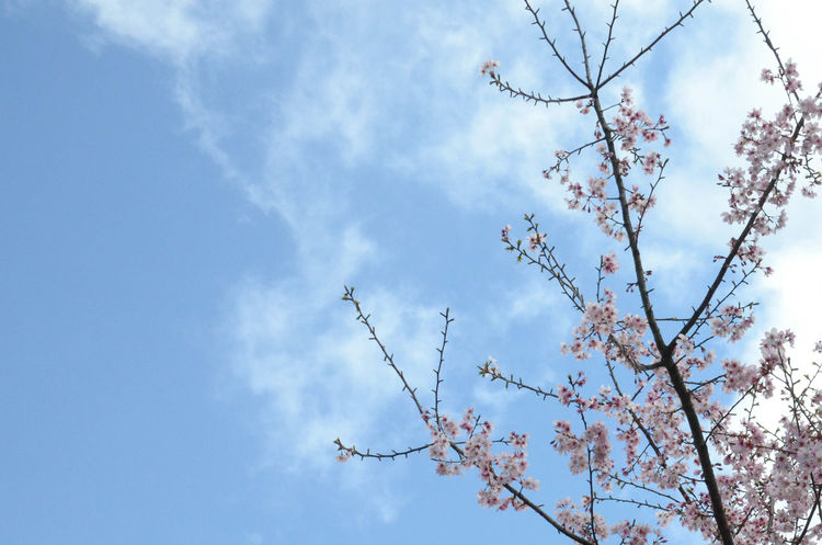 Yes! today happened something made me felt so sad. I don't know how to describe it. But I realized that people will never free themself from human's dark side. The new SAKURA picture for everyone.Wish everybody have a nice day. Flowers Enjoying Life Winze's Life Taipei