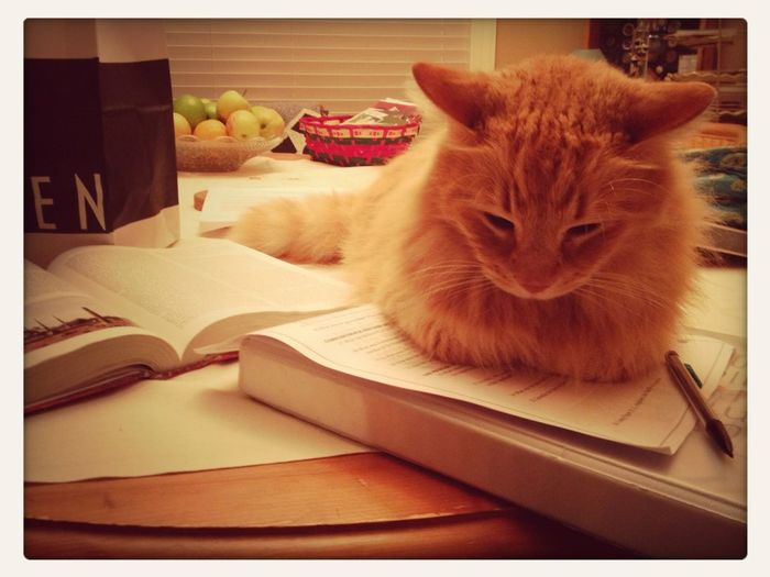He Is Laying On My Homework.