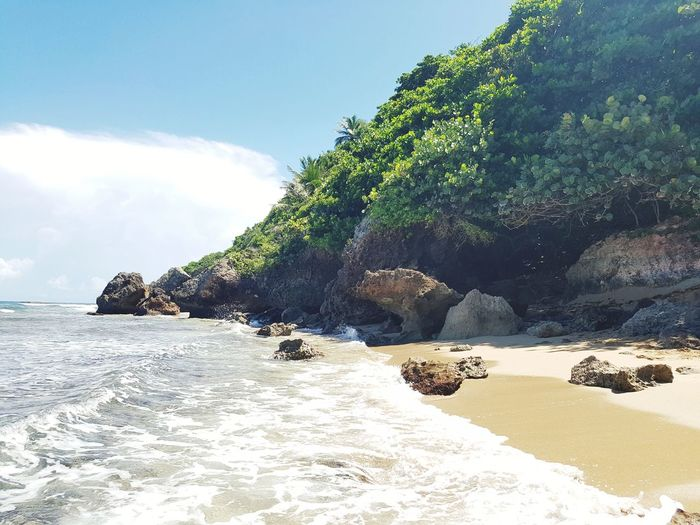Puertoricotourism Aguadilla, Puerto Rico Beach Sand Sea Nature Tree