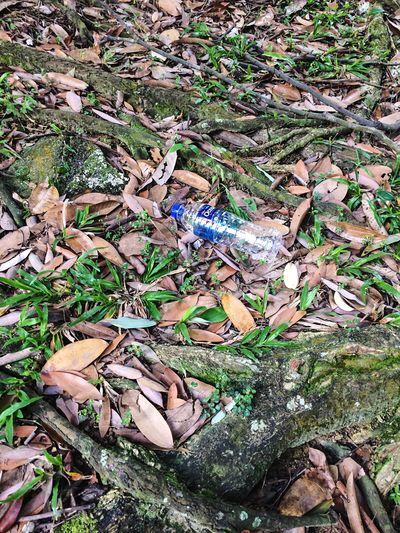 A used plastic bottle littered on the forest floor High Angle View Garbage Bottle Day Outdoors Large Group Of Objects Nature No People Forest Rubbish Dead Leaves In The Forrest Dead Leaves Dead Leaves On The Ground Nature Nature Photography EyeEm Best Shots Water Bottle