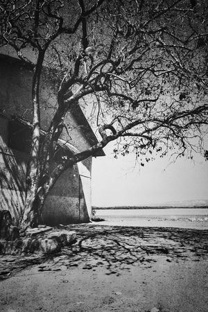 Tree Nature Water Beauty In Nature Horizon Over Water Streetphotography_bw Street Photography - EyeEm Awards 2016 Black & White EyeEm Nature Lover Abandoned Places Light And Shade Creativity Creative Light And Shadow Light Up Your Life Photography Black And White Photography Blackandwhite Black And White Monochrome Photography Beauty In Nature Eye Em Best Shots Tranquil Scene Branch Outdoors Tree