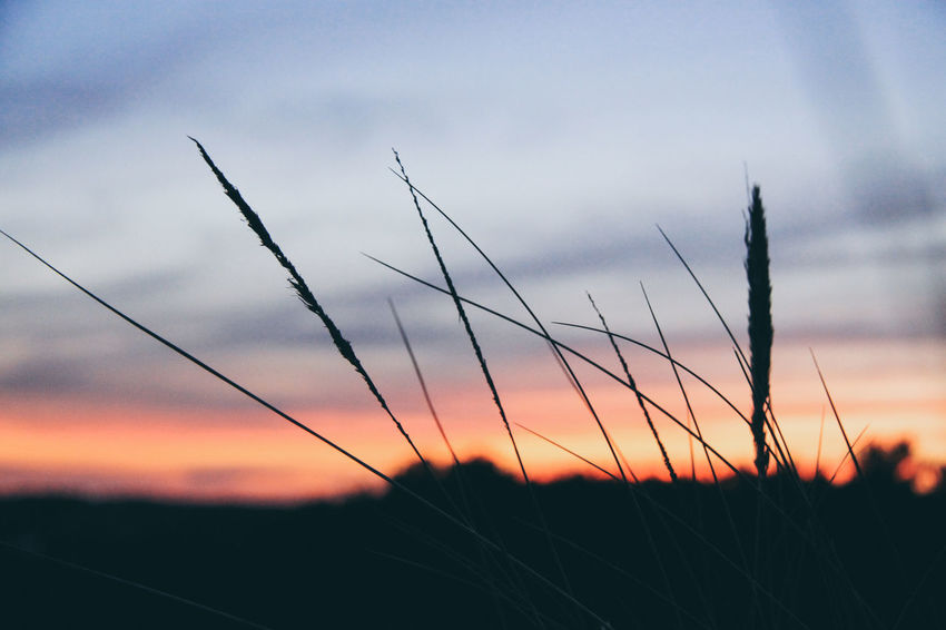 Denmark Beauty In Nature Close-up Day Field Grass Growth Landscape Nature No People Outdoors Plant Rural Scene Scenics Silhouette Sky Sunset Tranquil Scene Tranquility