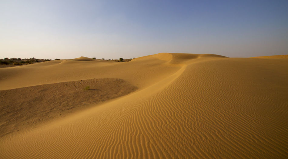 Sand Desert Land Scenics - Nature Landscape Climate Arid Climate Sand Dune Tranquility Beauty In Nature Environment Sky Nature Tranquil Scene No People Day Non-urban Scene Outdoors Remote Clear Sky Semi-arid India Backgrounds Rajasthan