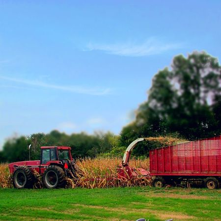 Cornfield Field Farm Equipment Harvest Harvest Time Tractor Mode Of Transport Agriculture Growth Blue Sky Rural Scene Farm From My Point Of View My Backyard Michigan United States