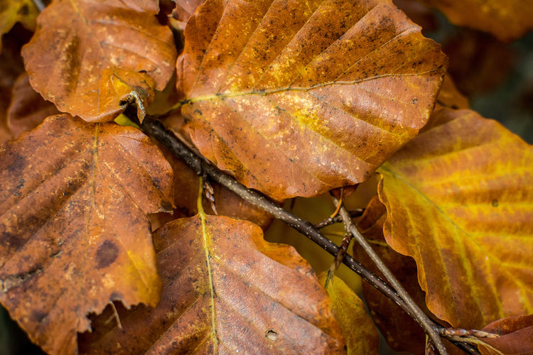 Close-Up Of Autumn Leaves