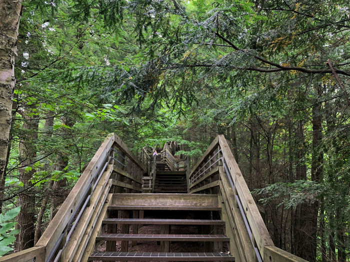 Low angle view of footbridge amidst trees in forest