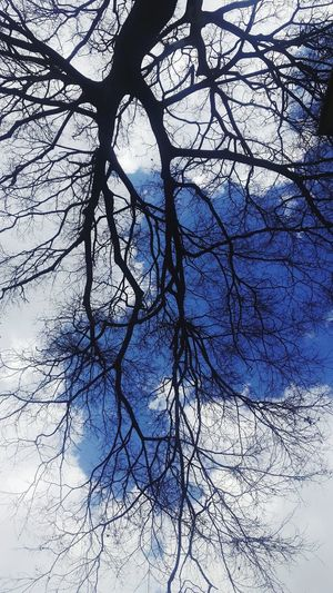 Tree Branch Nature Sky Backgrounds Low Angle View No People Bare Tree Full Frame Beauty In Nature Close-up Day Outdoors
