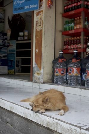 ubud is a mood Animal Themes Bali Bali, Indonesia Day Dog Domestic Animals Domestic Cat Full Length Mammal Napping Dog No People One Animal Outdoors Pets Sleeping Dog Small Dog Soda Bottles Storefront Ubud Ubud, Bali Water Bottles