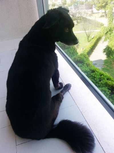 My sweetest love <3 Sweet♡ Curious Animals Pets Indoors  Watching