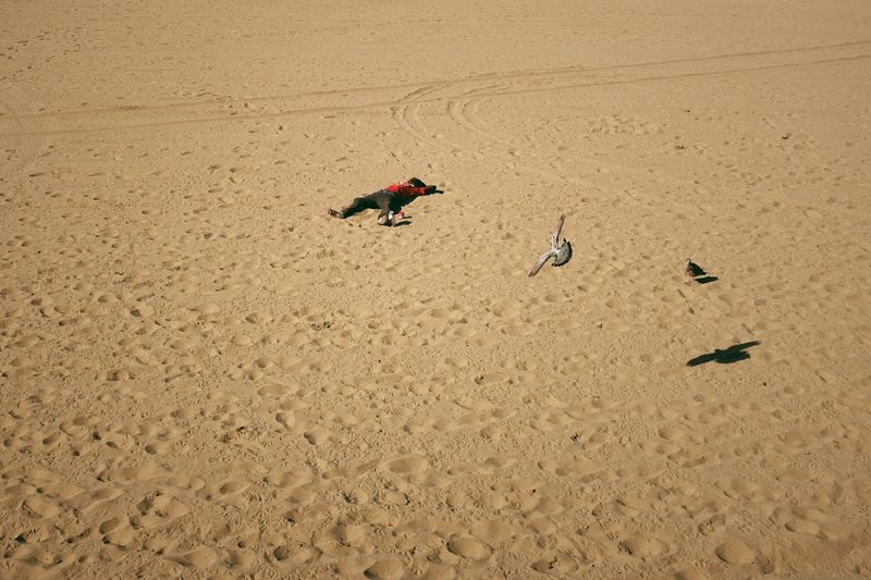 High angle view of birds on sand