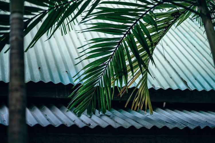 Low Angle View Of Palm Leaves Against Roof