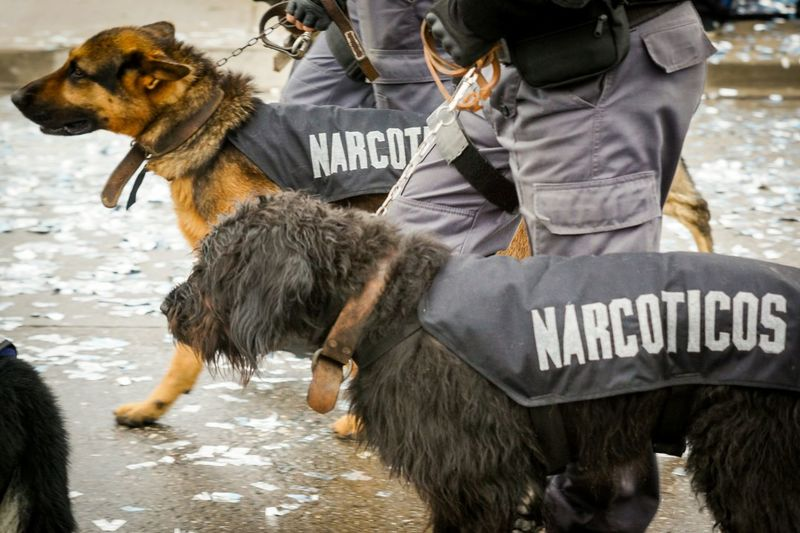 Argentines celebrate May Revolution Day