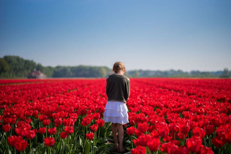 Rear view of girl standing by red tulips
