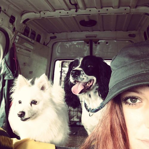 Me and my crew! Dog Doggy Gingerbastard Ginger Hooligans Balloffluff Mansbestfriend Companion Thisishowweroll
