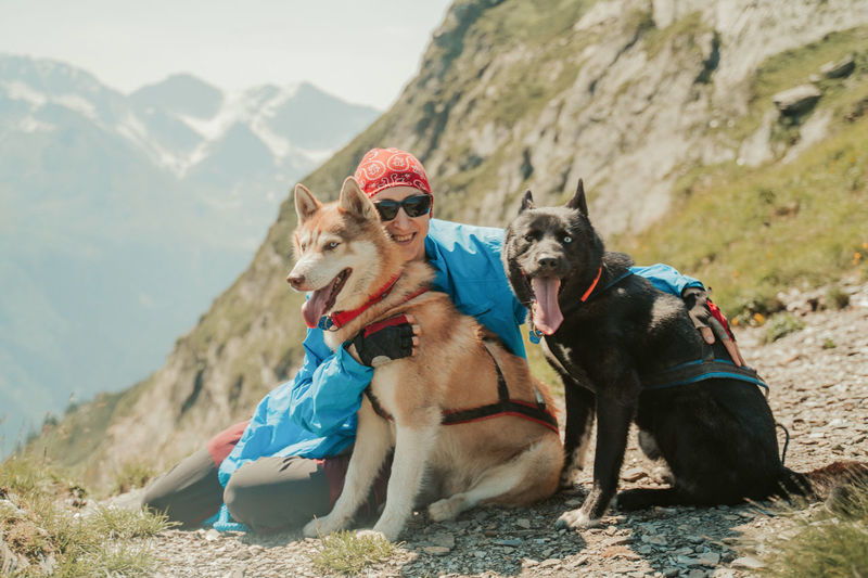 Dogs sitting on rock against mountain range