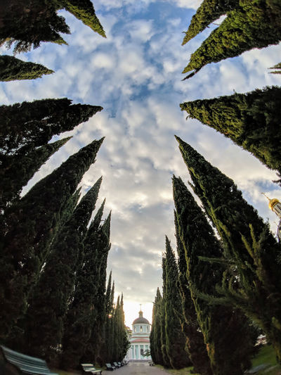 "In this super wide-angle shot two rows of pine tree line up to create a ""sky corridor"" leading to a small church in the Russian city of Sochi. The highlights are a bit blown and corner sharpness leaves something to be desired, but I think it's not bad for being a phone photograph. What do you think? Plant Sky Tree Cloud - Sky Nature No People Architecture Day Low Angle View Outdoors Building Exterior Beauty In Nature Travel Destinations Religion Faith Vertigo Wide Angle Perspective Looking Up Church PhonePhotography"