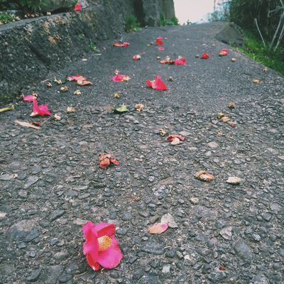 椿 Flower