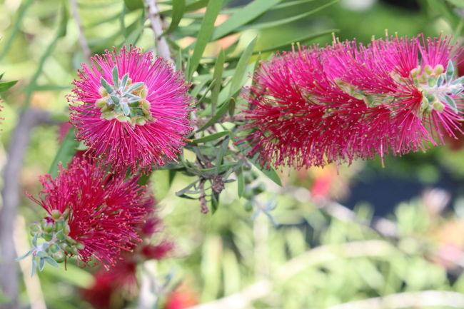 Botanical Gardens Flower
