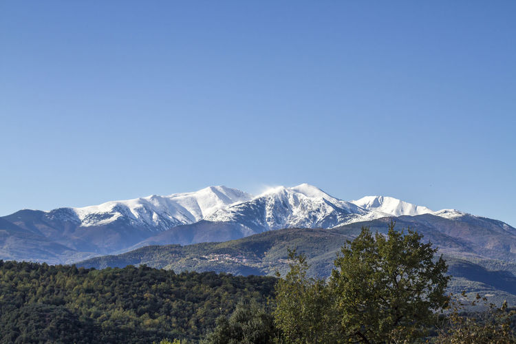 Canigou Over Céret Canigou Mountain Ceret Ceret, France Pyrenees Beauty In Nature Blue Canigou Clear Sky Day Landscape Mountain Mountain Range Nature No People Outdoors Scenics Sky Snow Tree