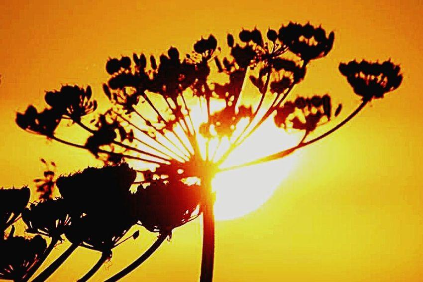 Sun_collection Sunset Silhouettes Streamzoofamily Tadaa Community