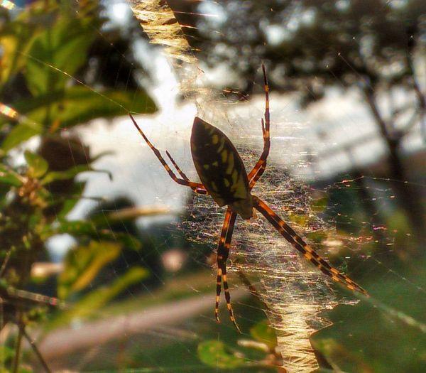 Animal Leg Web