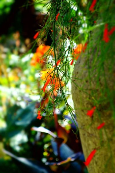 Garden Photography Green Colors Selective Focus Tree Multi Colored Branch Forest Close-up Fungus