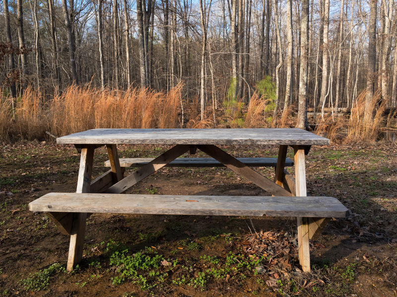 Autumn Beauty In Nature Bench Day Forest Growth Landscape Nature No People Outdoors Park Bench Picnic Table Tree Wood - Material