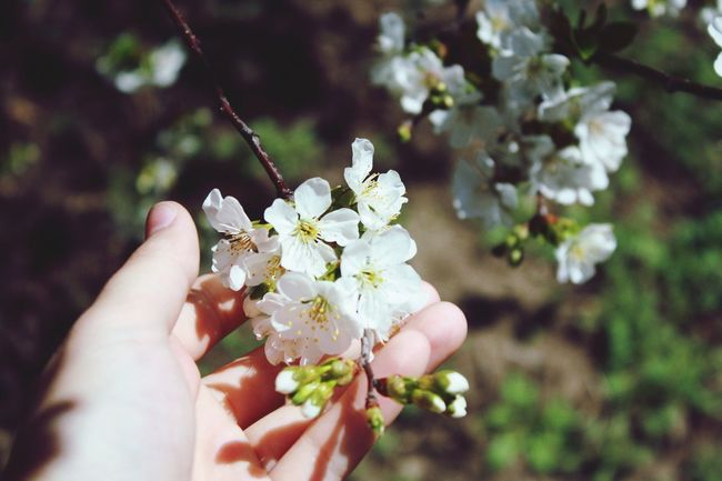 Nature Blossom Spring Photography FirstEyeEmPic