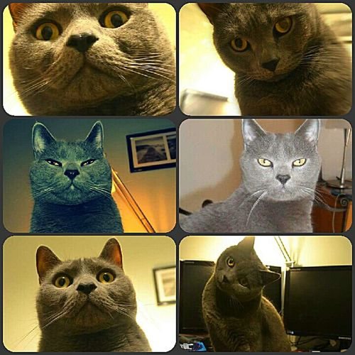 50 shade of...expression. Poldo il mio gatto.😻 Cat Mycat I ❤ Cat  Poldo Gatto Gatto😸 Certosino Cat Lovers Catsofinstagram Catoftheday Cat♡ Cats Catsoftheworld Relaxing Katzen Hanging Out Hi! Taking Photos That's Me Enjoying Life Animals Animal Animal Photography Animal Themes Animal_collection