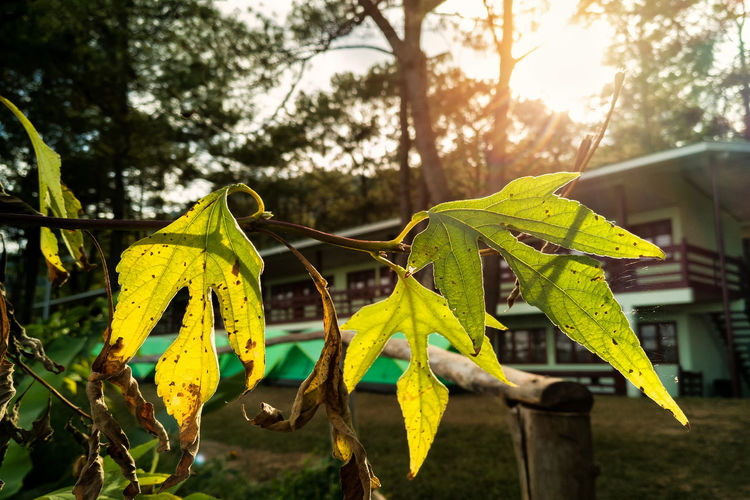 Close-up of yellow leaves on tree against sky