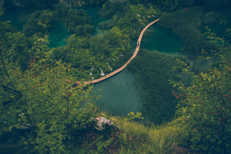 EyeEm Selects Tree Nature Outdoors No People Tranquility Green Color Water High Angle View Beauty In Nature Growth Scenics Landscape Forest Day Plant Sea Rural Scene Sky