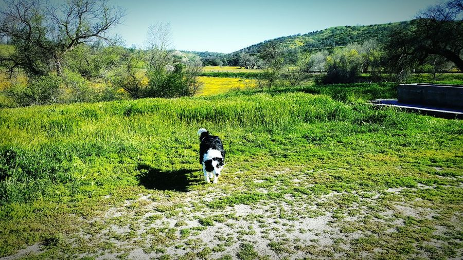 Shell Creek Road Wildflowers Spring 2016 Doggie Love Border Collie