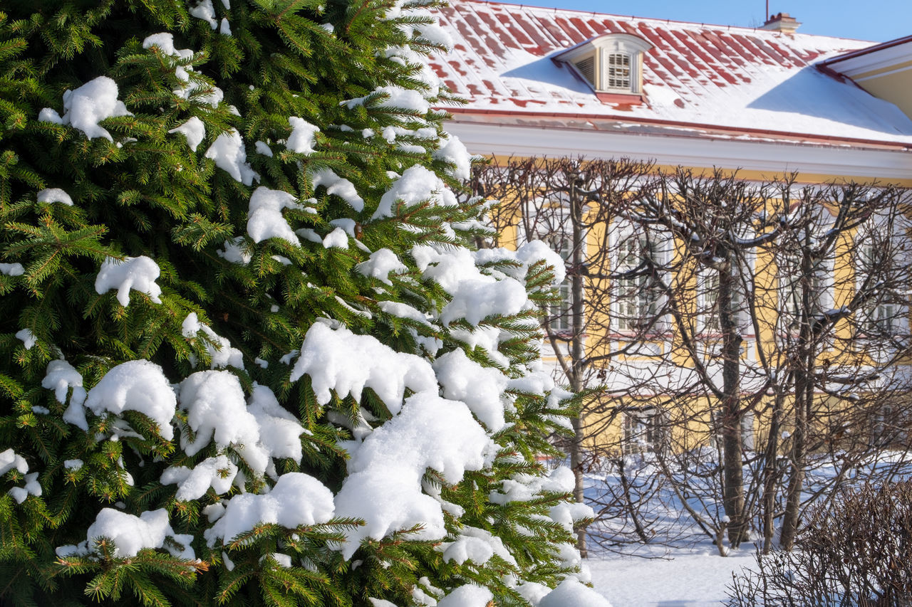 SNOW COVERED PLANTS AGAINST TREES AND HOUSES