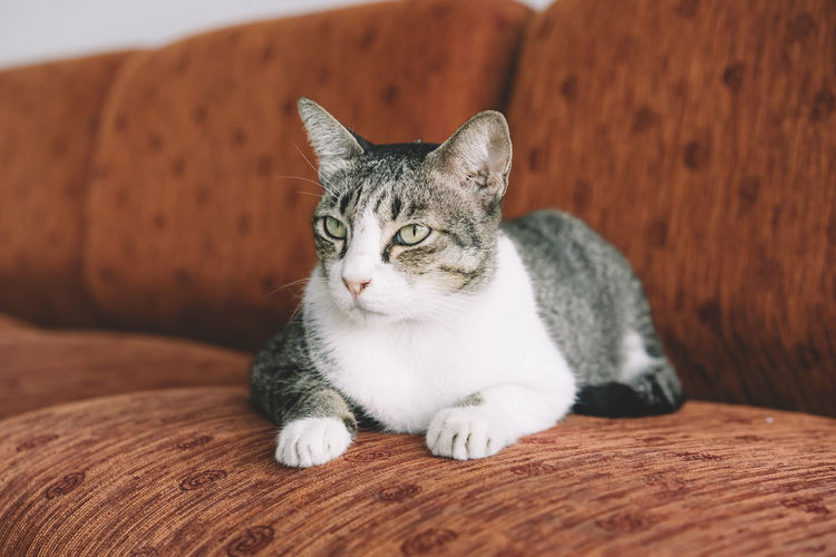 Animal Themes Close-up Day Domestic Animals Domestic Cat Feline Indoors  Looking At Camera Mammal No People One Animal Pets Portrait Sitting Whisker