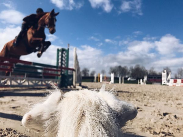It's all about perspective Day One Animal Domestic Animals Mammal Horse Livestock Working Animal Herbivorous Pets Horseback Riding Dog Camel Focus On Foreground Sky Riding One Person Real People Hoofed Mammal Horse Photography  Equestrian Animal Themes Horses Animals Dogs