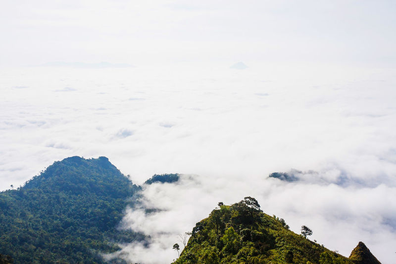 Mountains And Misty. Cloud - Sky EyeEm Best Shots Fog Forest Idyllic Landscape Learn & Shoot: Simplicity Mist Misty Mountains Nature Nature On Your Doorstep No People Non-urban Scene Outdoors Phuchidao Scenics Sky Thailand The Great Outdoors - 2016 EyeEm Awards The Great Outdoors With Adobe WeatherPro: Your Perfect Weather Shot White Color Shades Of Winter