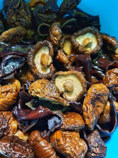 High angle view of mushrooms