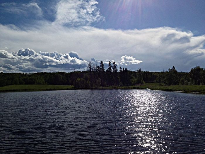 View of calm lake against trees