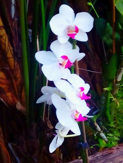 Tenerife Island Loropark Orchids