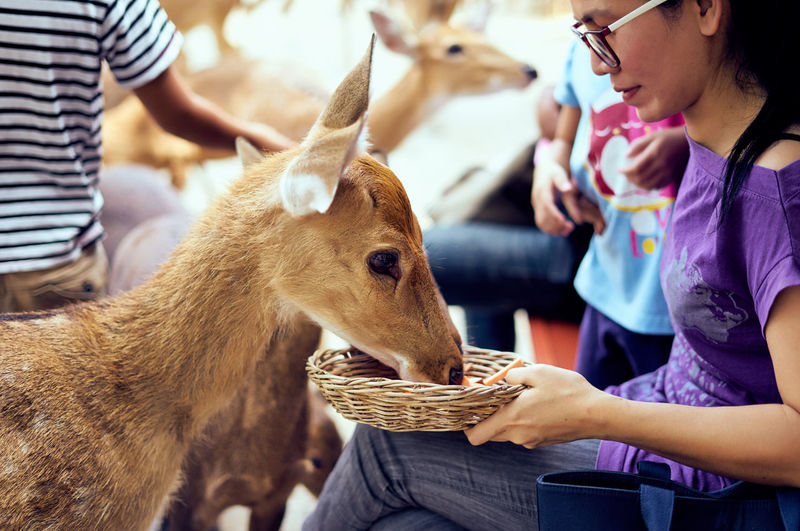 Deer Feeding Animals Animal Themes Childhood Close-up Day Domestic Animals Focus On Foreground Indoors  Leisure Activity Lifestyles Livestock Mammal People Real People Togetherness Second Acts Focus On The Story