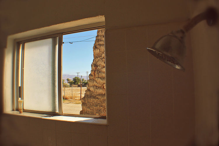 Desert Palm Tree Day From The Shower Indoors  Motel Bathroo Shower Shower Head Window